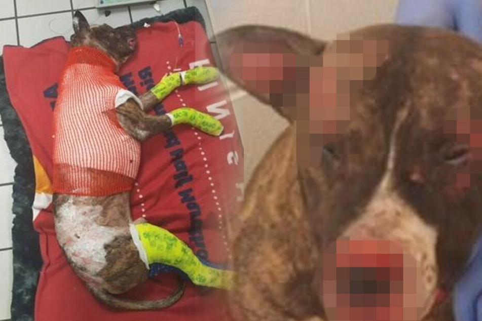 Grausam! Hund wird mit Brandbeschleuniger übergossen, angezündet und stirbt