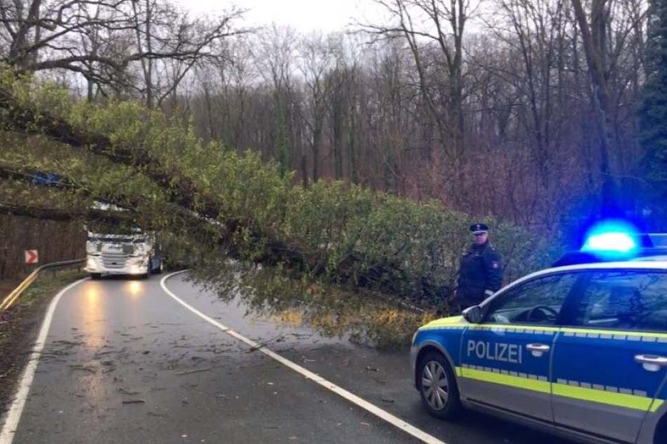 Zahlreiche Bäume, wie dieser 50 cm dicke, lagen quer und blockierten die Straße.