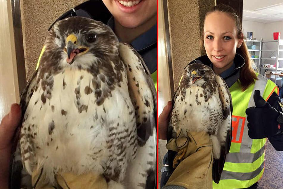 Wegen diesem Vogel musste am Morgen die A8 gesperrt werden.