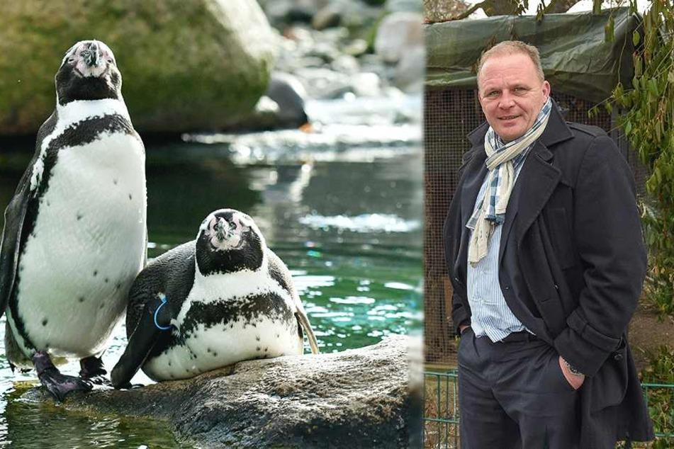 So steht es um unser neues Pinguin Café im Zoo