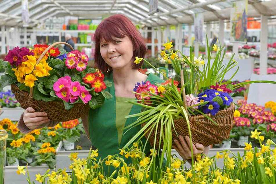 Floristin Heike Weigelt (38) zeigt die heranwachsende Blumenpracht in der Gärtnerei Rülcker. Bald ziehen die Frühblüher ins Palais um.