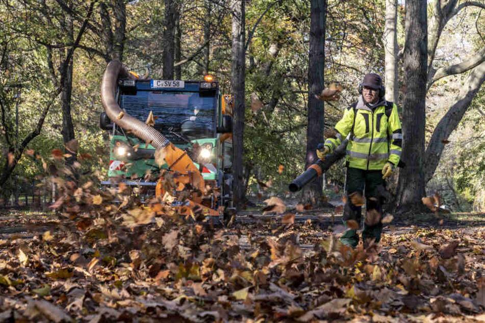 Alljährliche Laubentsorgung in der Stadt Chemnitz. Ralf Keinert vom Grünflächenamt ist mit dem Laubbläser im Einsatz.