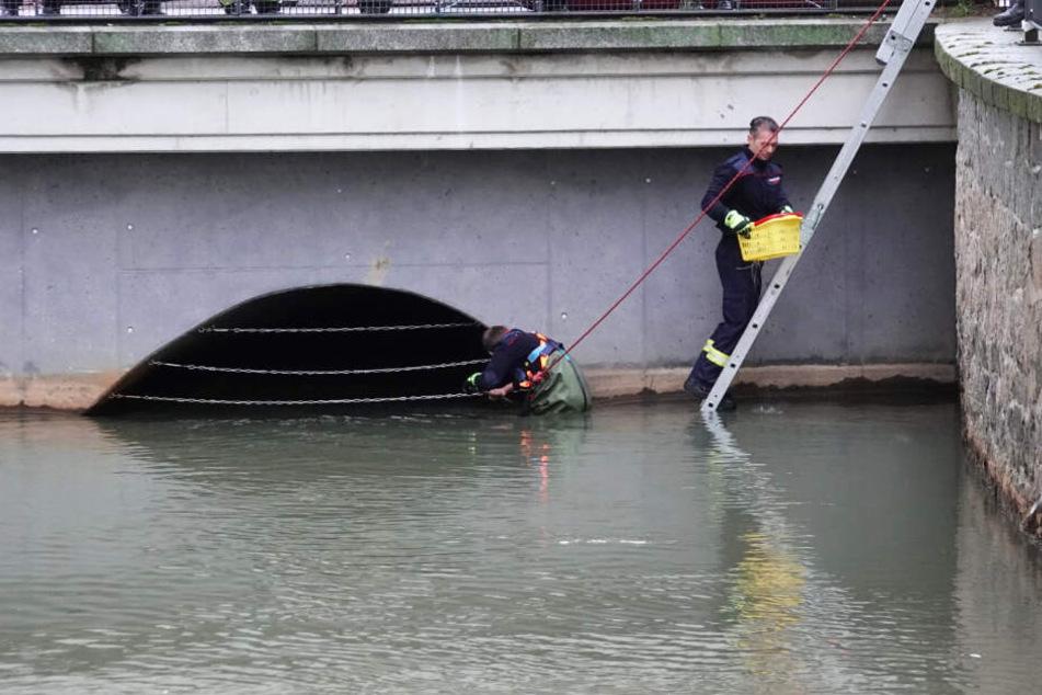 """Die Einsatzkräfte """"fischten"""" die kleinen Tierchen aus dem Wasser und brachten sie in Sicherheit."""