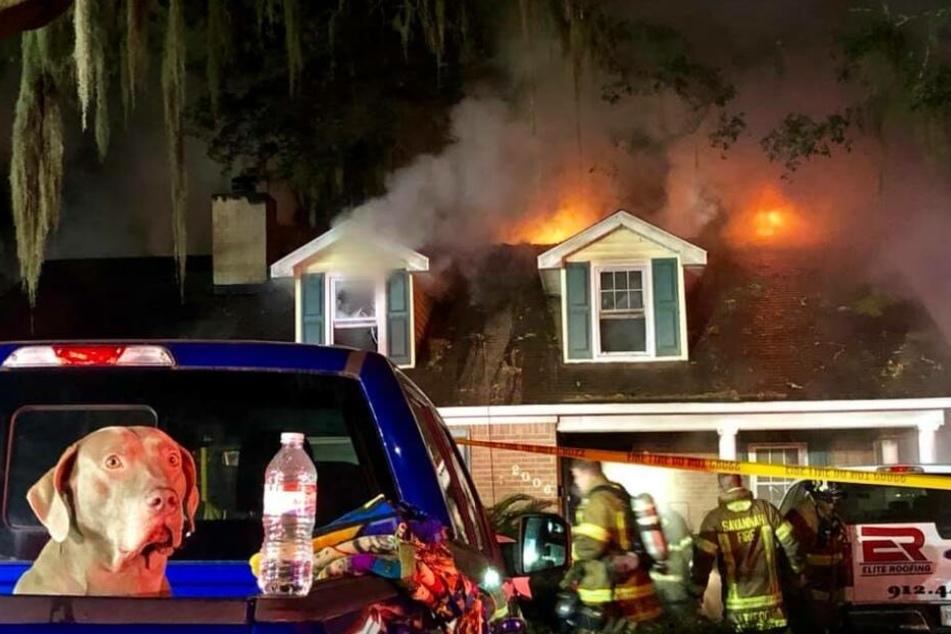 Sammy auf einer Ladeklappe vor dem brennenden Haus.