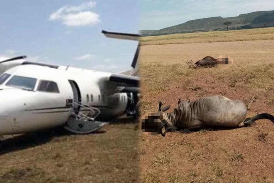 Flugzeug knallt bei Landung in Herde und tötet Tiere