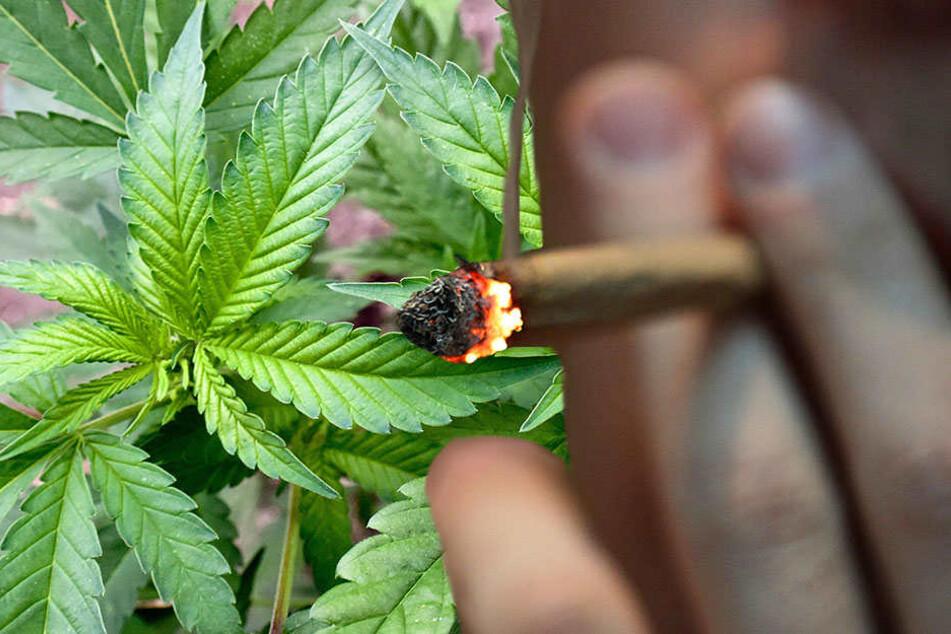 Neben 32 Cannabispflanzen fanden die Polizisten bei ihrer Durchsuchen noch viel mehr.
