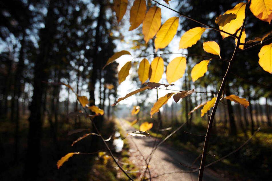 Jeder vierte Baum in NRW ist stark geschädigt.