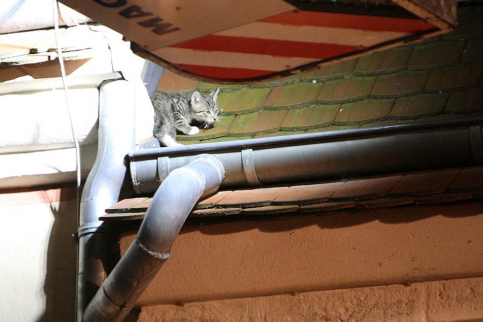 Das Katzenbaby saß verstört in der Dachrinne eines Hauses.
