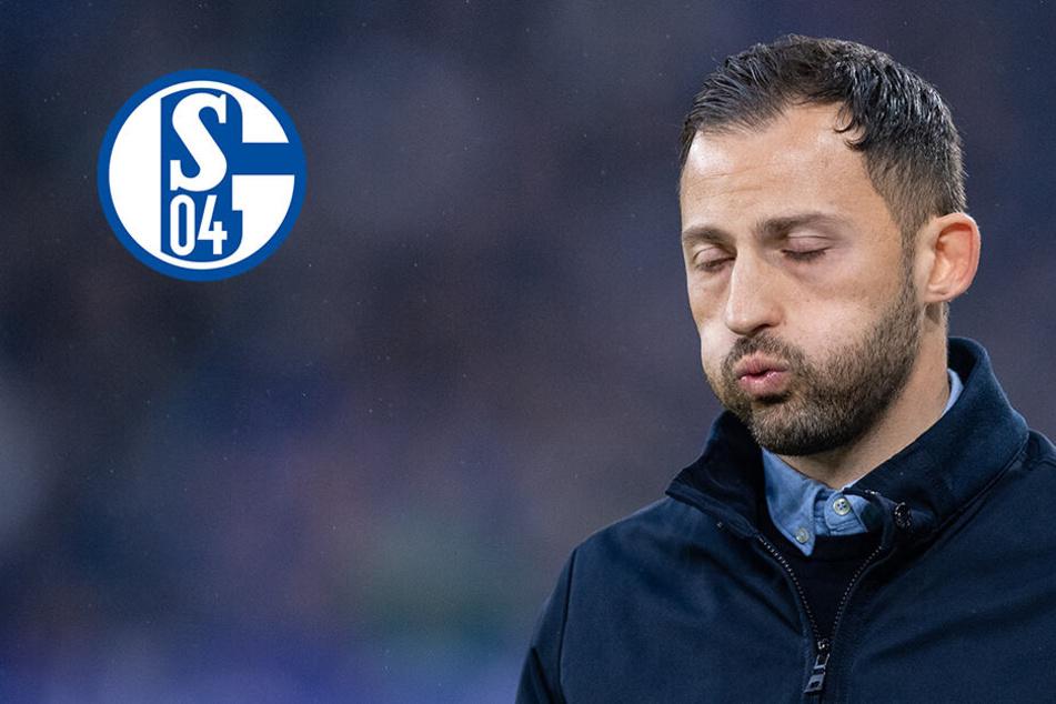 Schalke desolat: Tedesco vor dem Aus!