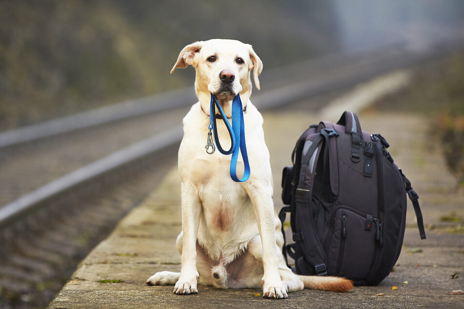 Hauptsächlich Hunde sind bislang auf den Privatflug gebucht. Aber auch Vögel, Kaninchen und Katzen wären möglich. (Symbolbild)