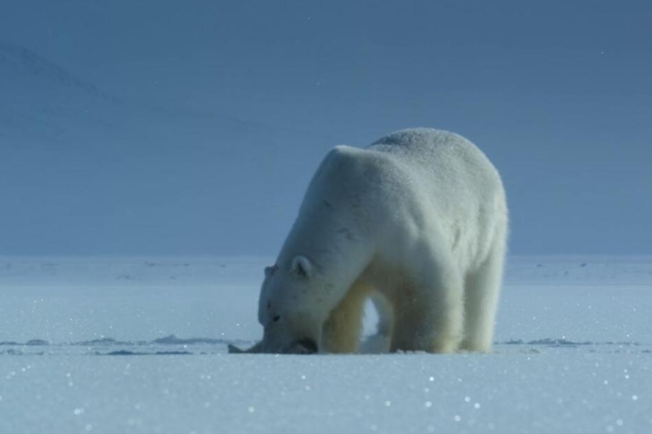 Ein Eisbären beißt zu: auch vor diesen Bildern warnt Netflix seine User auf Twitter.