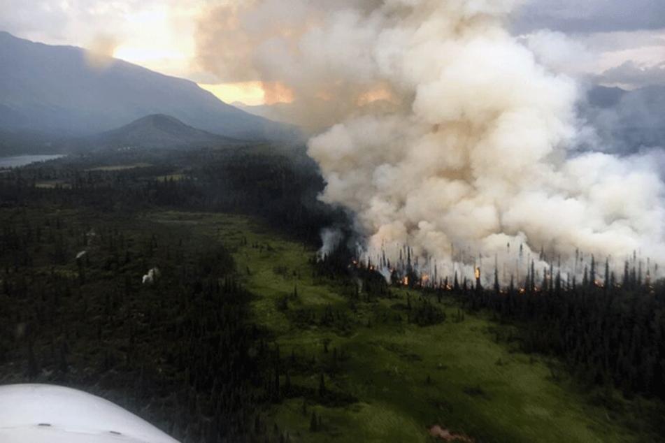 9000 Quadratkilometer betroffen! Hier wüten Hunderte Waldbrände