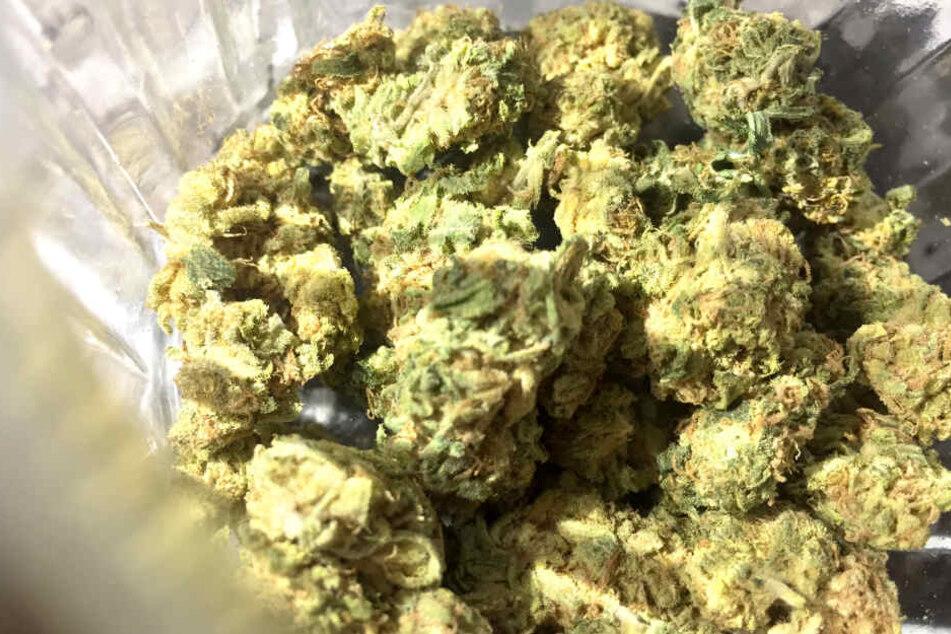 Im Cannabis wurden Fäkalreime und auch Schimmelpilze gefunden. (Symbolbild)