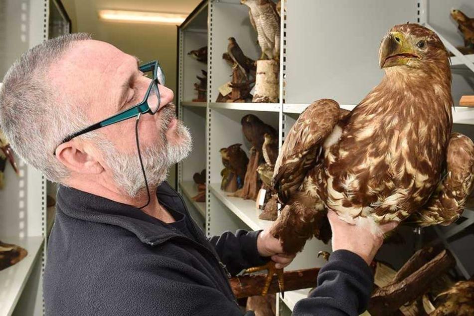 Schüsse auf Wildtiere vergiften Sachsens Adler