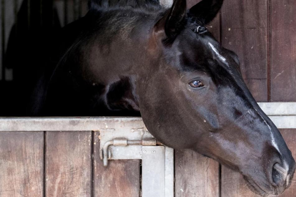 Pferd beißt Pflegerin in Hals: Retter müssen Frau vor Ort wiederbeleben