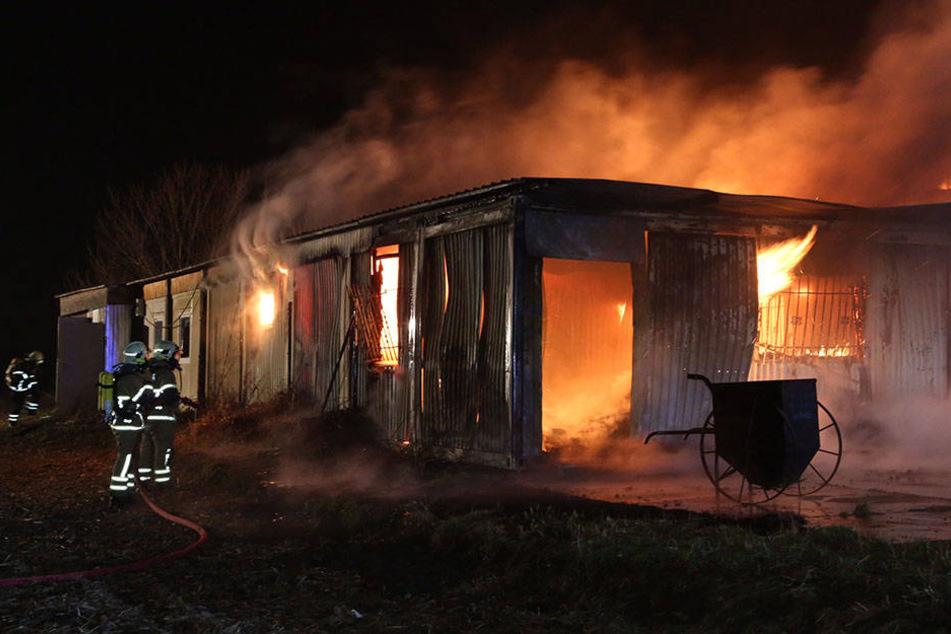 In der Lagerhalle eines Fischhandels brach das Feuer gegen 3.45 Uhr am Sonntagmorgen aus.