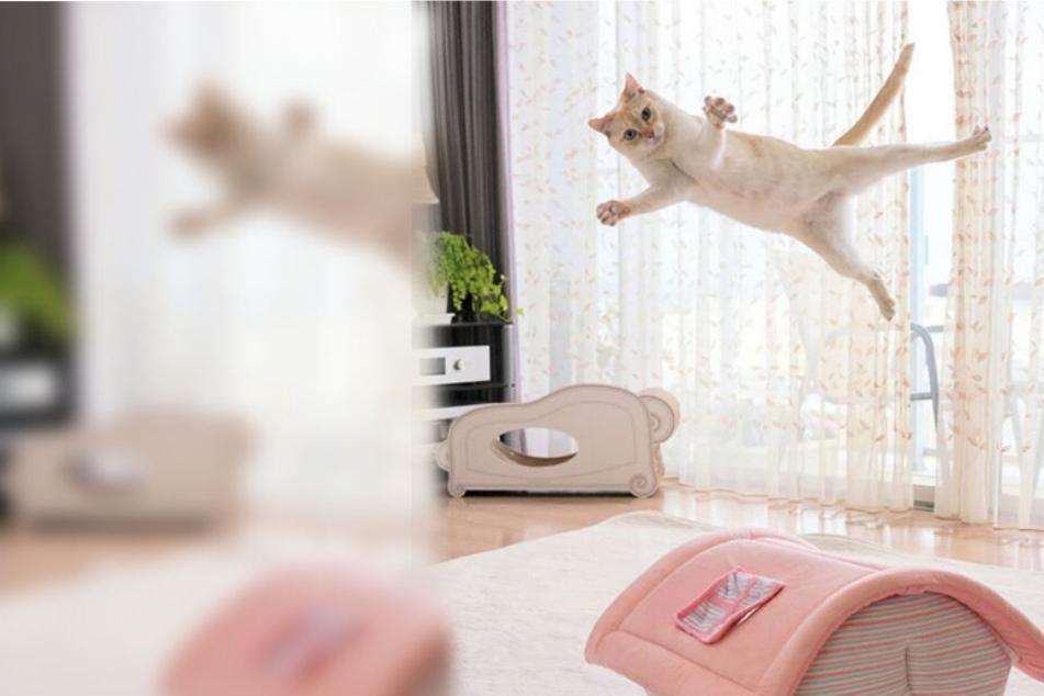 Ninja-Katze aus Japan: Chaco erobert mit krassen Moves das Internet