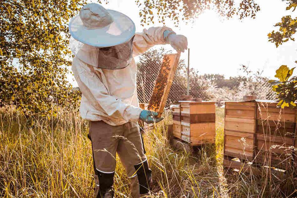 Umweltschutz und Honig für die Mitarbeiter: Porsche lässt 1,5 Millionen Bienen