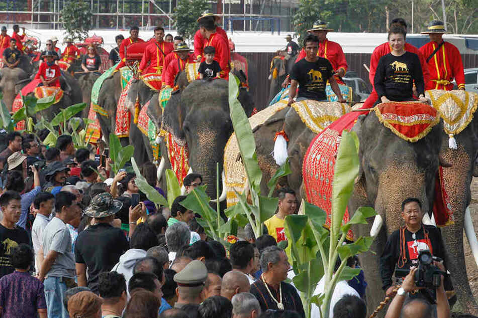Elefant läuft Amok: 18 Verletzte bei Straßenfest