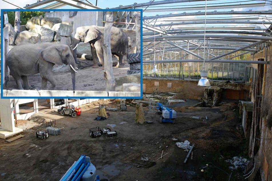 Dresdner Zoo: Erster Blick ins neue Afrika-Haus