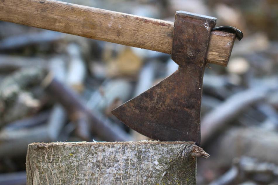 Schwere Verletzungen: Ast fällt Mann bei Baumfällarbeiten auf den Kopf