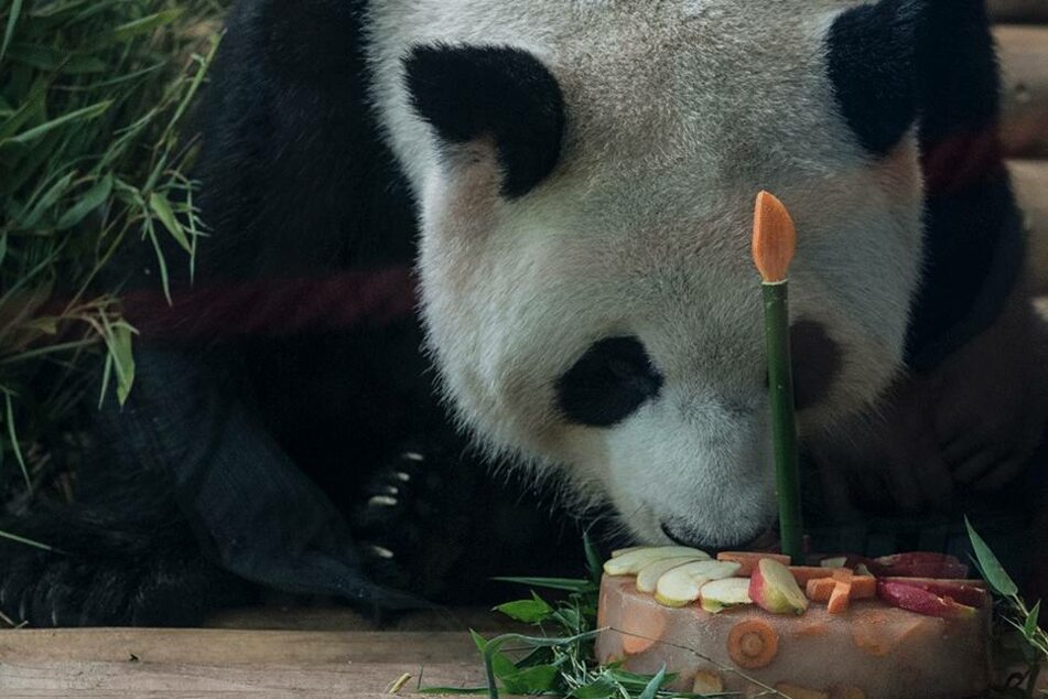 "Riecht das nicht gut?! Jiao Qing muss erstmal schauen, ob ihm sein ""Kuchen"" gefällt..."
