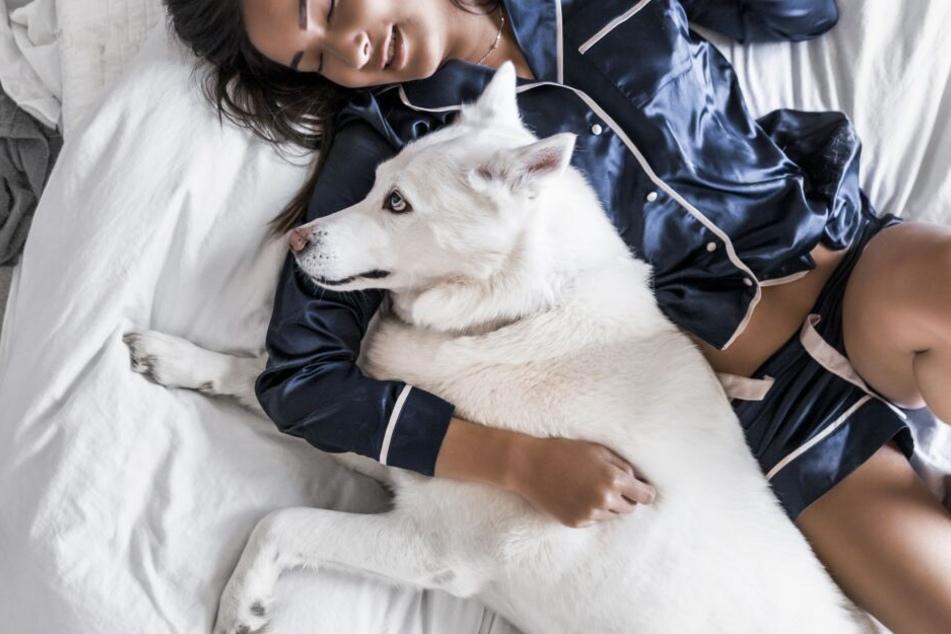 Kann ich meinen Hund mit im Bett schlafen lassen?