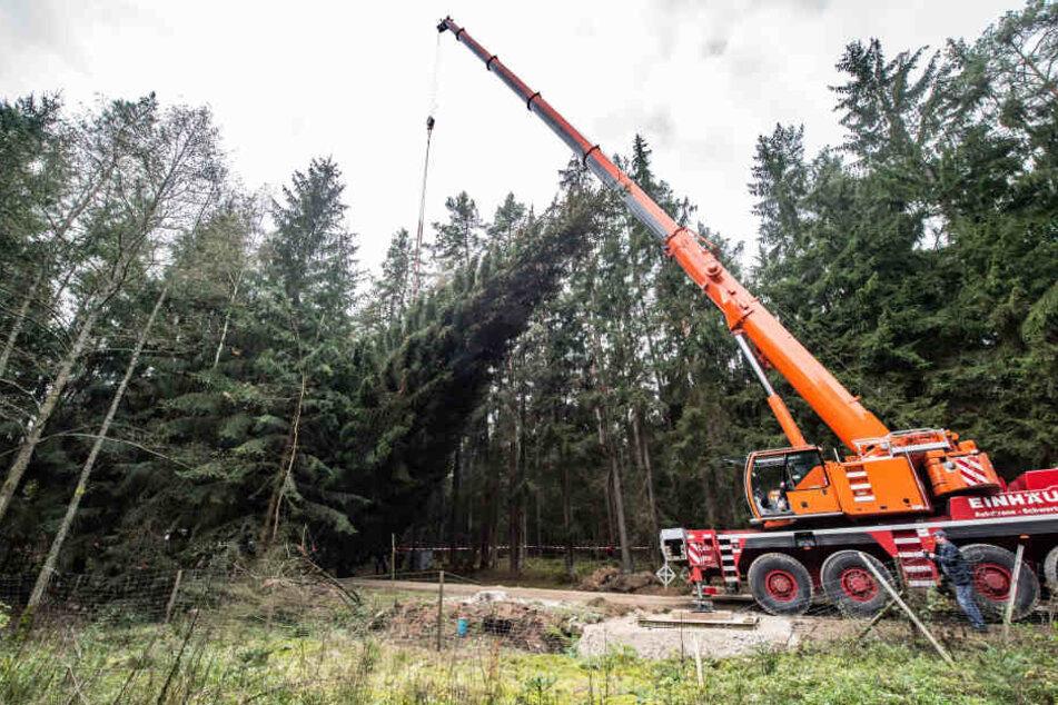 Ein übergroßer Weihnachtsbaum rief jetzt die Polizei auf den Plan. (Symbolbild)