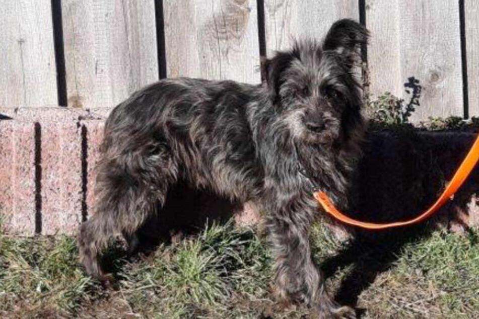 Lucky ist acht Jahre alt und seit März verschwunden.