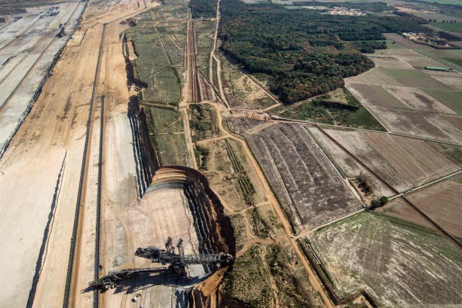 """RWE will """"angemessenen Abstand"""" zum Hambacher Forst halten"""