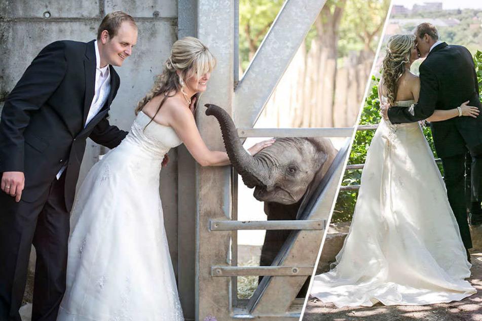 Melanie und Martin Schwerendt schweben nach ihrer Hochzeit im Bergzoo Halle auf Wolke sieben. Auch ein kleiner Elefant freut sich mit dem Paar.