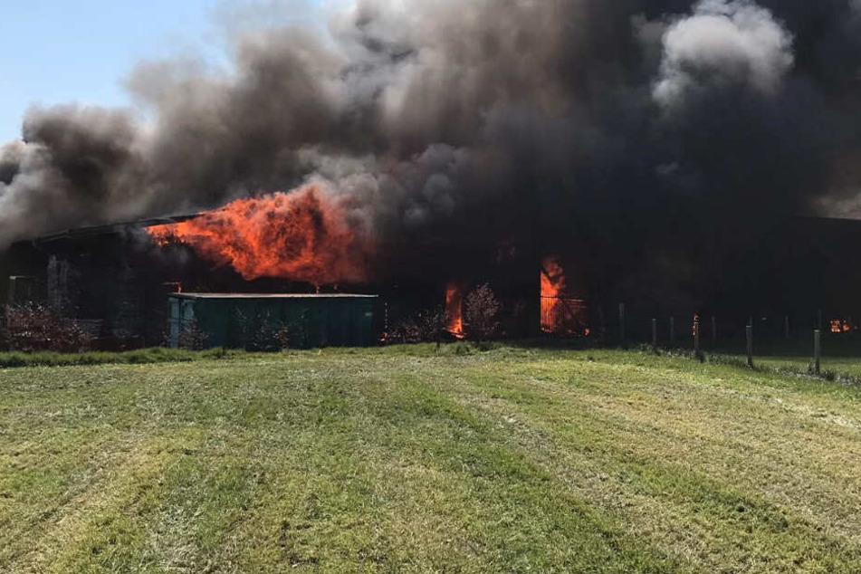 Tischlerei in Flammen: Einsatzkräfte ringen um Kontrolle über Großbrand!