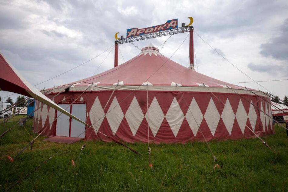 """Der """"Circus Afrika"""" gastiert derzeit in Limbach-Oberfrohna. PETA kritisiert den Umgang mit den Elefanten."""