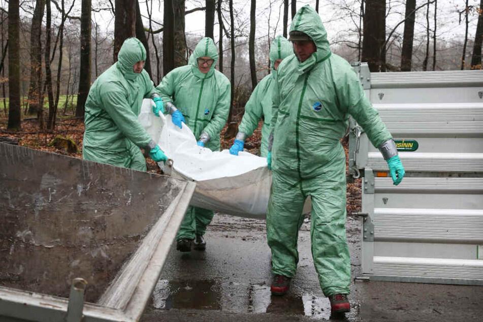 Männer in Schutzanzügen tragen bei einer Übung einen gefundenen Kadaver (Dummy) zu einem Behälter.