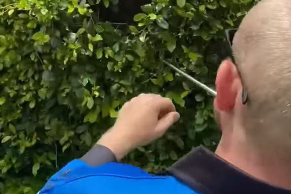 "Gardener fears for his life when he comes face to face with ""monster"""