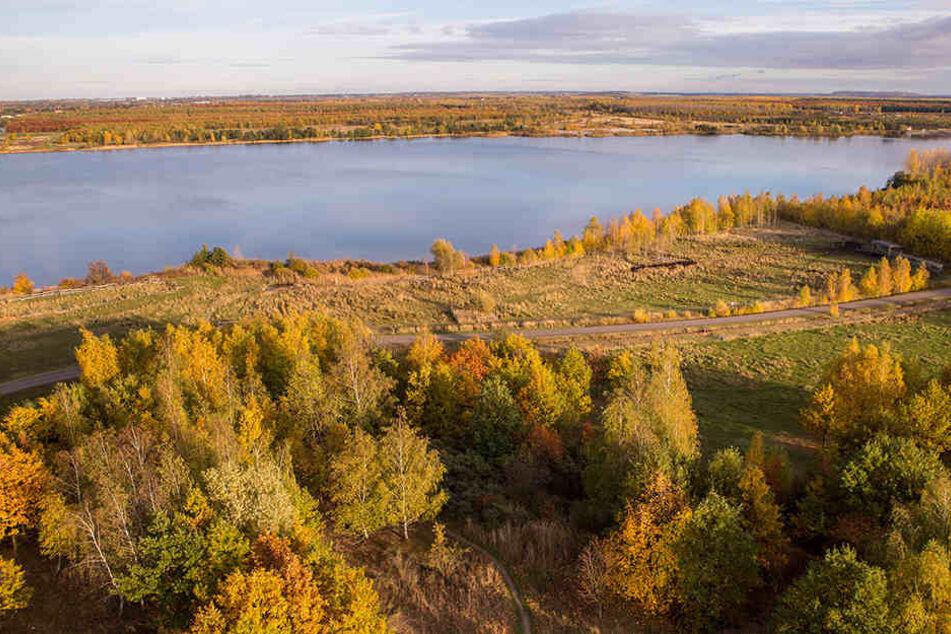 Am Cospudener See wurde ein mit der Vogelgrippe infizierter Vogel entdeckt.