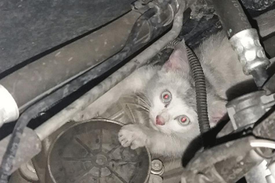 Die kleine Katze versteckte sich im Motorraum des Polizeiwagens.