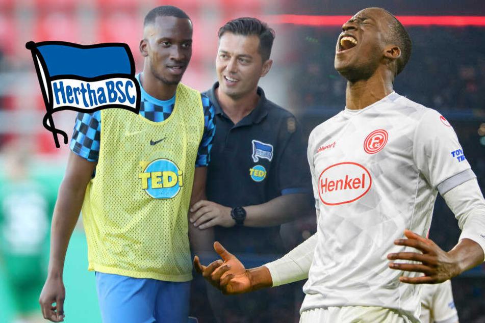 Hertha will Bayern ärgern: Mach's noch einmal, Dodi!