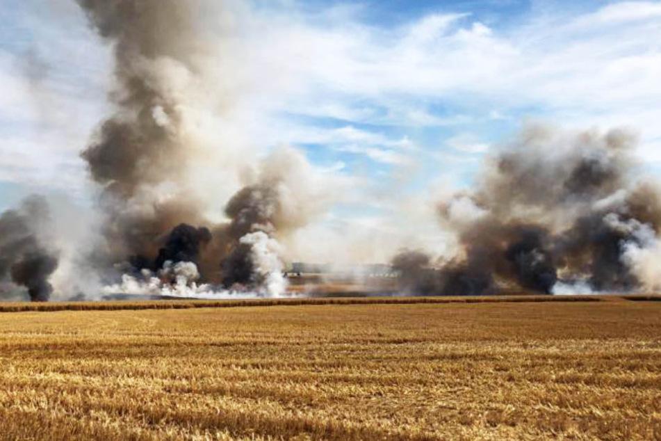 Feuerwehr im Dauereinsatz: Flammen zerstören etliche Felder