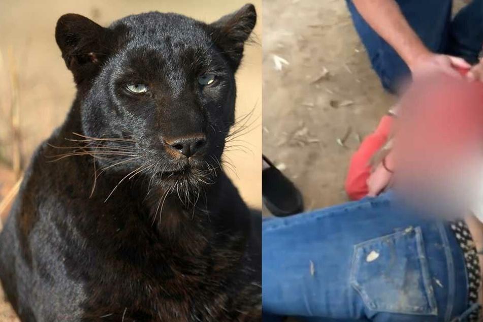 Frau will in Zoo Selfie mit schwarzem Panther machen: Das endet blutig