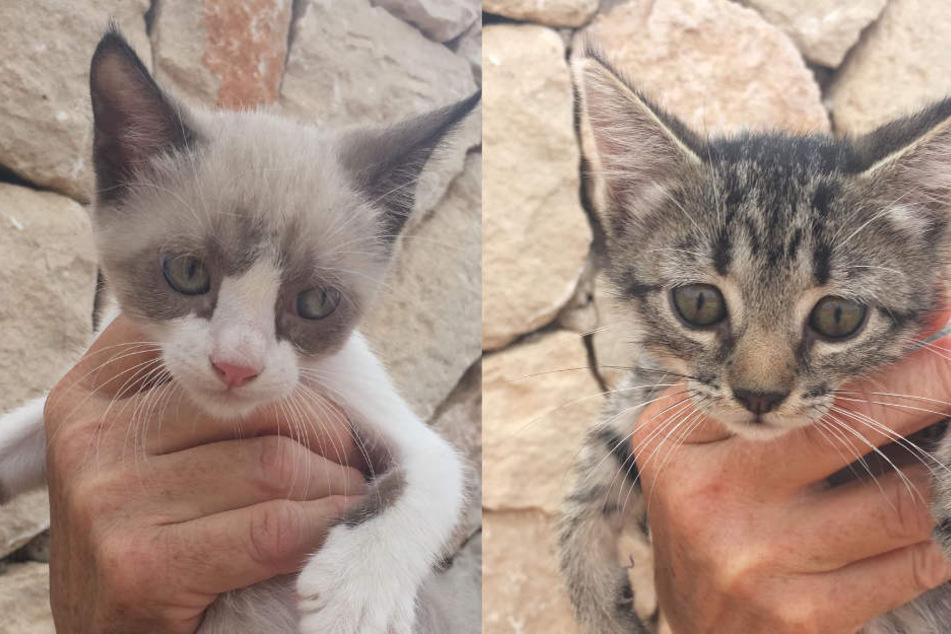 Timon und Nala warten nur noch auf ihren Flug in ein besseres Katzenleben.