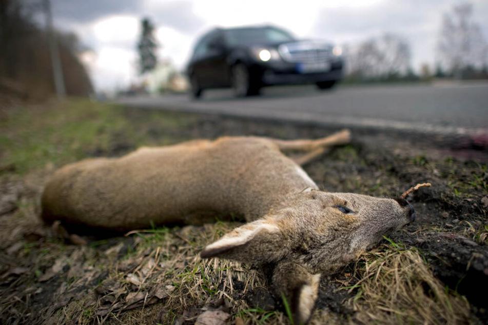 Nicht nur mehr Verkehr: Warum gibt es so viele Wildunfälle?