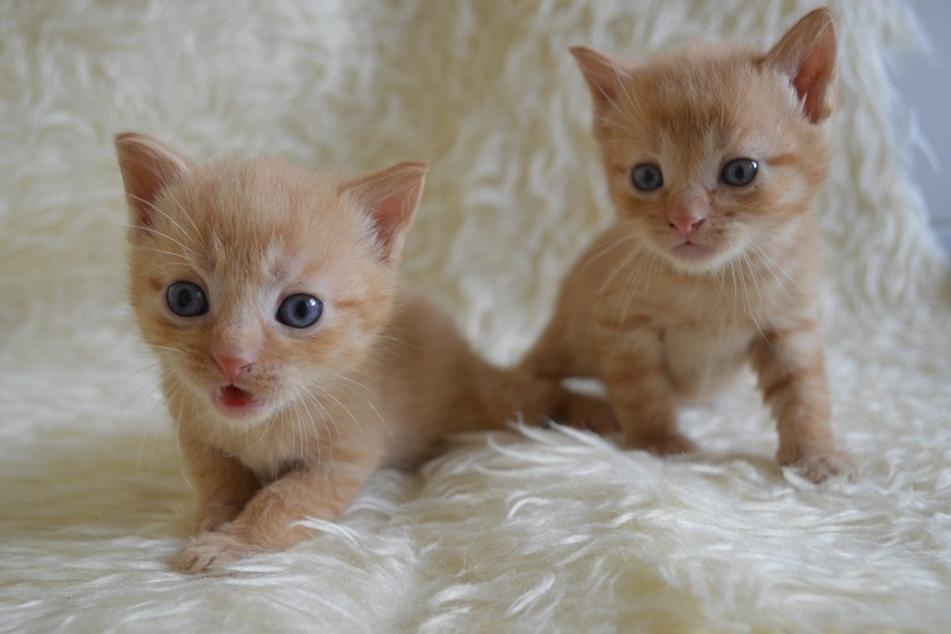 Diese süßen Kätzchen suchen noch Namenspaten!
