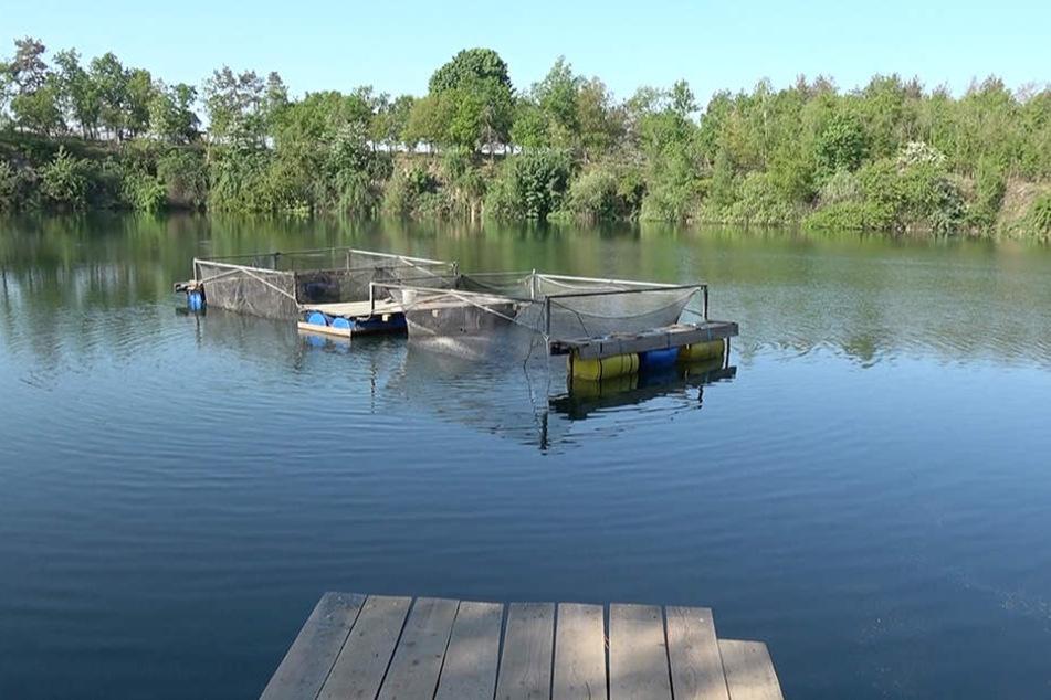 In diesem Teich in einem Naherholungsgebiet in Flechtlingen ist der 63-Jährige ertrunken.