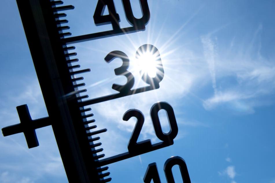 In Lingen im Emsland kletterte das Thermometer bis auf 42,6 Grad - nie zuvor war es hierzulande heißer.