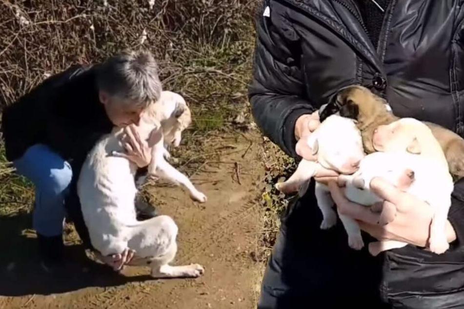 """Das Team von """"Diasozo Animal Rescue"""" griff ein."""