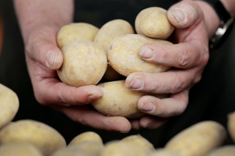 Die Kartoffelpreise sind deutlich angestiegen.