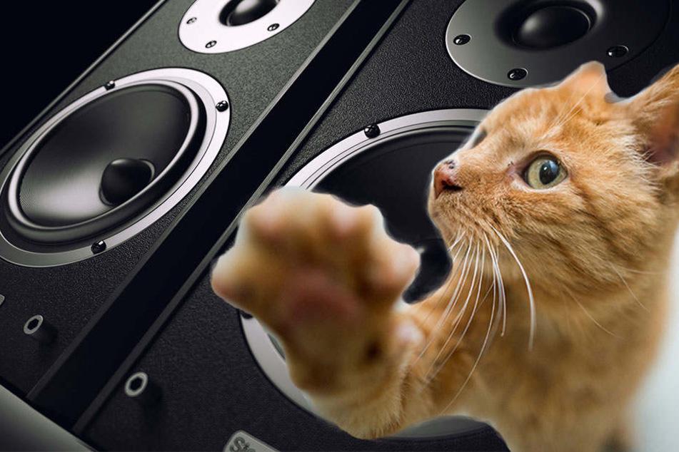 Die Katze drehte in der Wohnung einfach die Musik laut (Bildmontage).