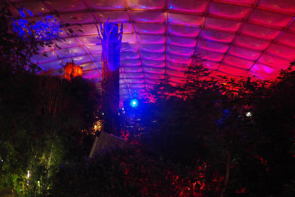 """Das """"Magische Tropenleuchten"""" sorgt für eine tolle Atmosphäre im 26 Grad warmen Gondwanaland."""