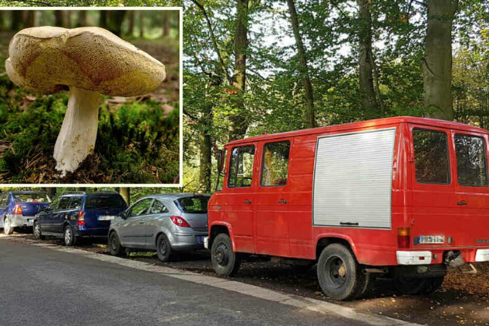 Reihenweise abgeschleppt! Wenn Pilzsammler auf dem Holzweg parken...
